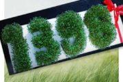 تزیین سبزه سفره هفت سین