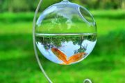 مدل تنگ ماهی سفره هفت سین
