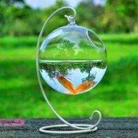 مدل های تنگ ماهی برای سفره هفت سین و ایده تزیین تنگ ماهی