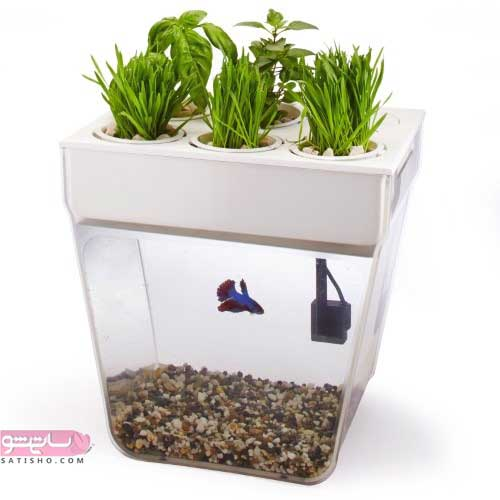 مدل های تنگ ماهی برای هفت سین و ایده تزیین تنگ ماهی