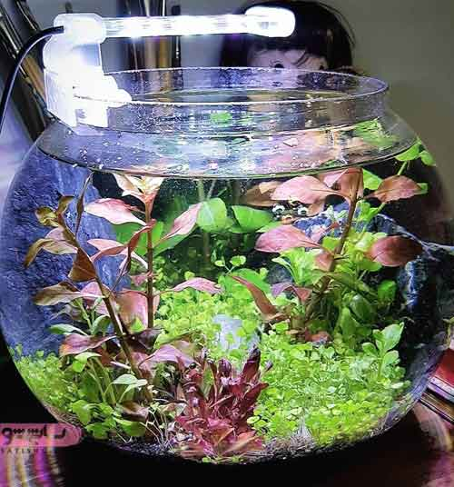 تنگ ماهی برای هفت سین و ایده تزیین تنگ ماهی عید نوروز 98