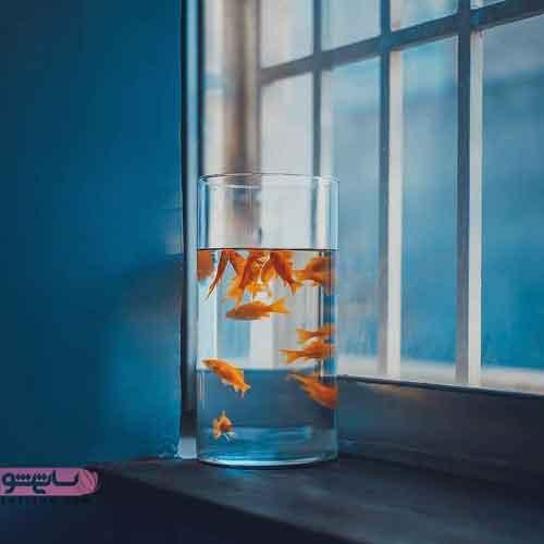 ماهی قرمز درون ویواریوم برای سفره هفت سین