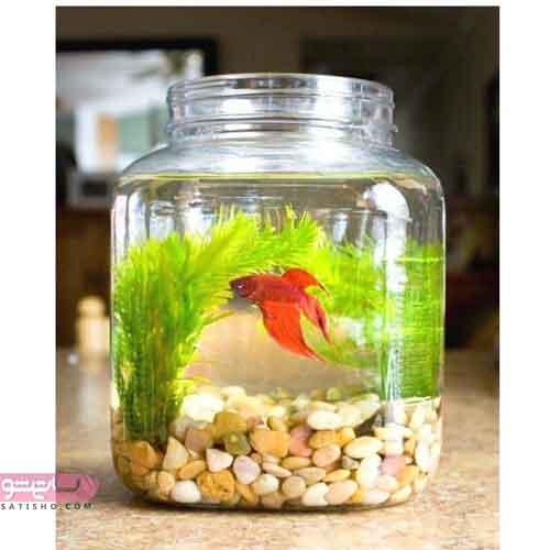 تنگ ماهی کوچک با ایده های جدید