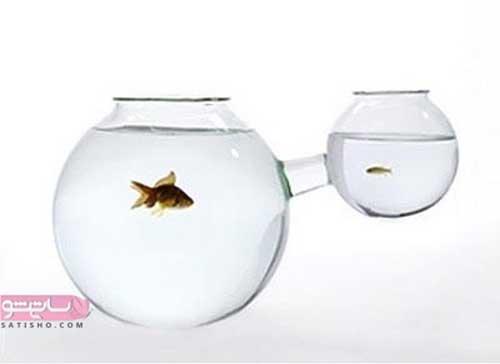 تنگ ماهی دو قلو خلاقانه برای سفره هفت سین