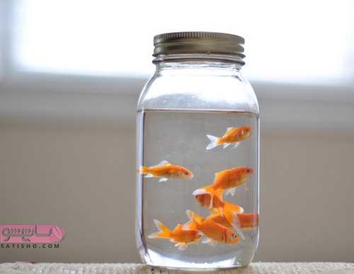 تنگ ماهی درون بطری کوچک