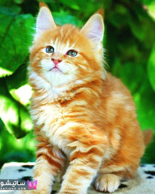 انتخاب اسم خوشگل برای گربه