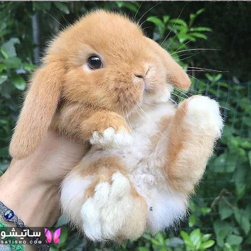 انتخاب اسم بانمک برای خرگوش